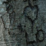 Heart Carved On A Tree